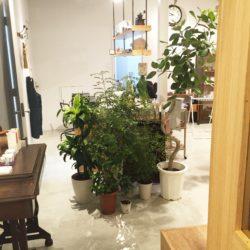 高槻市 美容室 インテリア 植物