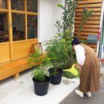 高槻市の美容室 植物 オーガニック 自然
