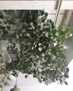 高槻市の美容室 オーガニック 自然